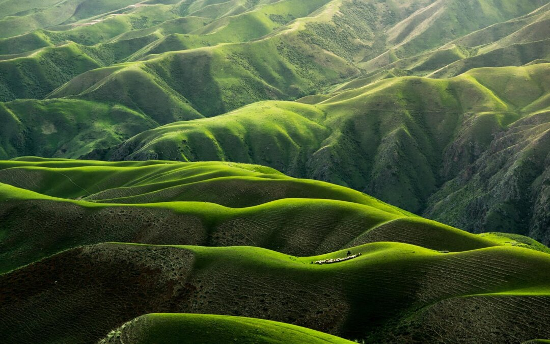 The endless green layers